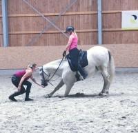 Typgerechtes Pferdetraining in Luxemburg