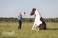DIE ZIRKUSLEKTIONEN-PARTY !!!! Teilnahme ohne eigenes Pferd