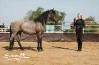06193 Wettin - Pferdeausbildung Schritt für Schritt